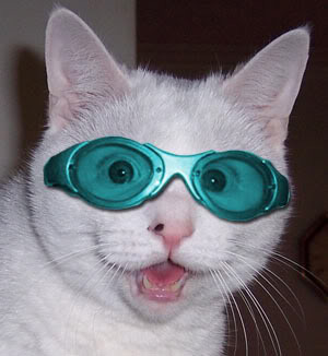 goofy cat with sunglasses animals with sunglasses