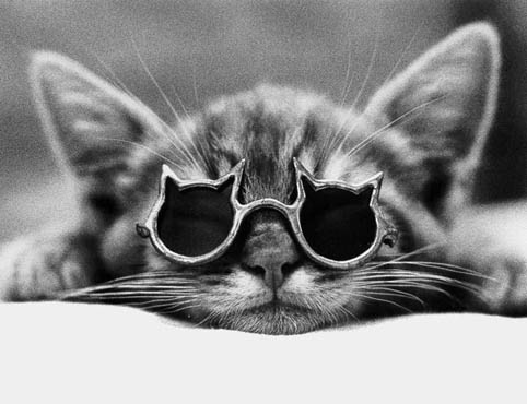 20 Awesome Cats Wearing Sunglasses