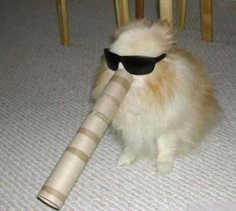 fluffy dog with his head stuck in a paper towel tubewith sunglasses - Paper Towel Roll