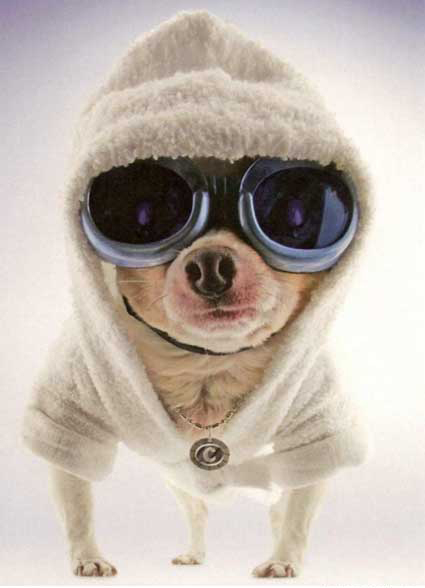 Animals with sunglasses - photo#15