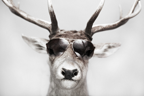 Animals with sunglasses - photo#16